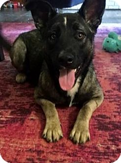 German Shepherd Dog Mix Dog for adoption in Dallas, Texas - Lola