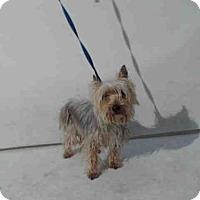 Adopt A Pet :: CHLOE - Orlando, FL
