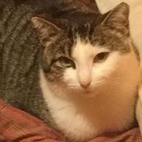Adopt A Pet :: Charity - Saskatoon, SK