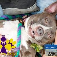 Adopt A Pet :: Bunny - Georgetown, TX