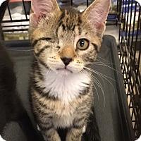 Adopt A Pet :: Ella - Stanhope, NJ