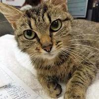 Adopt A Pet :: Adria - Noblesville, IN
