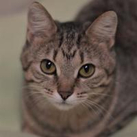 Adopt A Pet :: Cleo - Dodgeville, WI