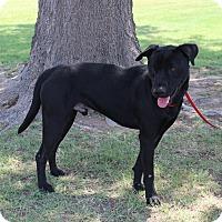 Adopt A Pet :: A08 Brook - Odessa, TX