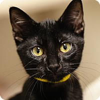 Adopt A Pet :: Polly - Springfield, IL