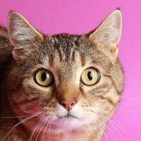 Adopt A Pet :: Remi - Longmont, CO