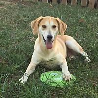 Adopt A Pet :: Hunter needs to be loved!! - Brattleboro, VT