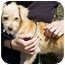Photo 3 - Poodle (Miniature) Mix Puppy for adoption in Berkeley, California - Archie