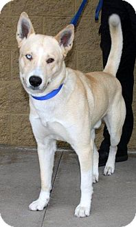 Husky Mix Dog for adoption in Sedona, Arizona - TOBY