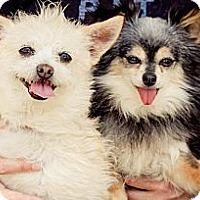 Adopt A Pet :: Tuesday - Acton, CA