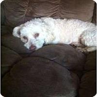 Adopt A Pet :: Toto - Oceanside, CA