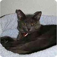 Adopt A Pet :: Misty - Marietta, GA