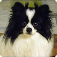 Adopt A Pet :: ROMEO - Hesperus, CO