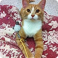 Adopt A Pet :: Renard - Warminster, PA