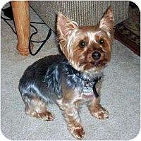 Adopt A Pet :: Cupcake - Hardy, VA