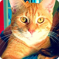 Adopt A Pet :: Horatio - Green Bay, WI