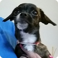 Adopt A Pet :: Fauna - Phoenix, AZ