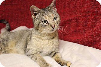 Domestic Shorthair Cat for adoption in Midland, Michigan - Kelpie - Sponsored - FIV +