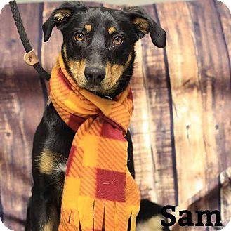 Australian Kelpie Mix Dog for adoption in Twin Falls, Idaho - Sam