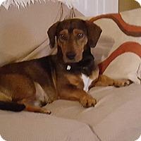Adopt A Pet :: Sonny - Northport, AL