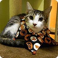 Adopt A Pet :: Josh - The Colony, TX