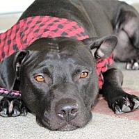 Adopt A Pet :: Sandra Dee - Courtesy Listing - Fredericksburg, VA