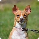 Adopt A Pet :: Sally- adoption pending
