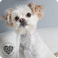 Adopt A Pet :: Gracie - Inglewood, CA