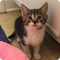 Adopt A Pet :: BRYSON - Burlington, NC