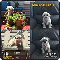 Adopt A Pet :: Ann-Margret - Garden City, MI