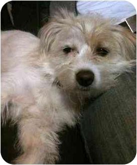 Terrier (Unknown Type, Small) Mix Dog for adoption in Beavercreek, Ohio - ANNIE - adoption pending