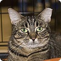 Adopt A Pet :: Poppy - New Port Richey, FL