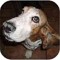 Adopt A Pet :: Kermit - Phoenix, AZ