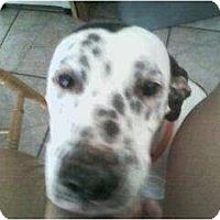 Adopt A Pet :: Roxy - League City, TX