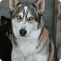 Adopt A Pet :: Oden - Canoga Park, CA
