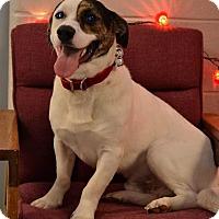 Adopt A Pet :: Jethro - Fort Riley, KS