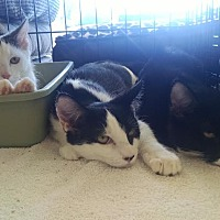 Adopt A Pet :: Basil, Juniper & Alfalfa - Berkeley Hts, NJ
