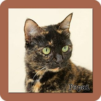 Domestic Shorthair Cat for adoption in Aiken, South Carolina - Pepsi