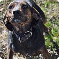 Adopt A Pet :: Robbie in CT - Manchester, CT