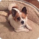 Adopt A Pet :: Miso