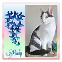 Adopt A Pet :: PINKY - Denver, CO