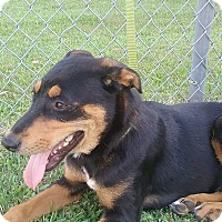 Adopt A Pet :: Kookie - Greenville, NC