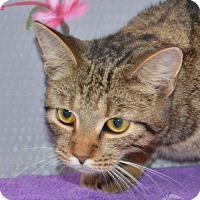 Adopt A Pet :: Butterscotch - Englewood, FL