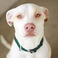 Adopt A Pet :: FORD - Kyle, TX