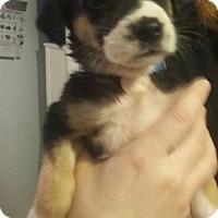 Adopt A Pet :: Kr Litter - Joran - APPLICATIONS CLOSED - Livonia, MI