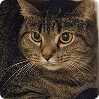 Adopt A Pet :: Dora - Alpharetta, GA