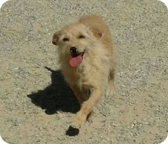 Terrier (Unknown Type, Small) Mix Dog for adoption in Las Vegas, Nevada - Princess