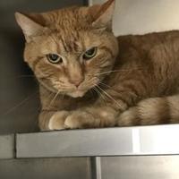 Adopt A Pet :: Slim - Cincinnati, OH