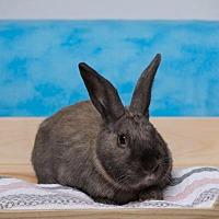 Adopt A Pet :: Mayweather - Pflugerville, TX