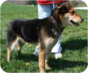 Shepherd (Unknown Type) Mix Dog for adoption in Osseo, Minnesota - Gretchen